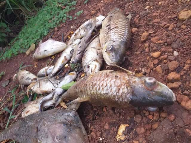 Mortandade de peixes no Rio Vacaria é investigada pela PMA