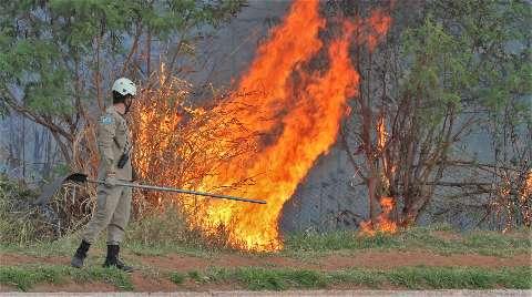 O mês nem acabou, mas incêndios superam em 133% o mesmo período do ano passado