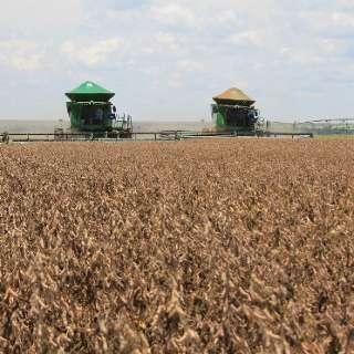 MS finaliza safra com produção 14% superior e 11,3 milhões de toneladas de soja