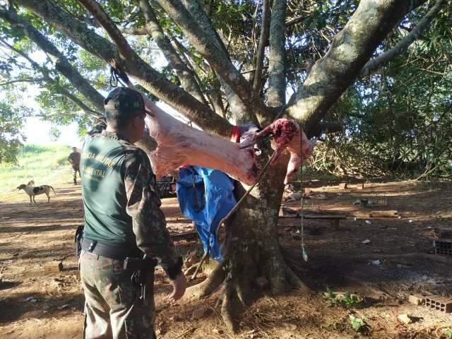 Cinco caçadores são presos com 18 cachorros e carne de javali