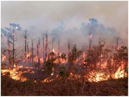 Em março, Pantanal registra maior número de queimadas dos últimos 16 anos