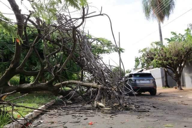 Vendaval derruba árvore que atrapalha trânsito no Jockey Club