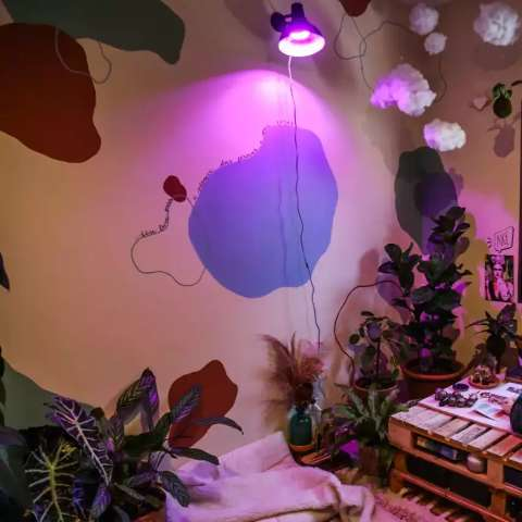 """Marcelo levou """"selva"""" para o quarto e plantas sobrevivem sem luz natural"""