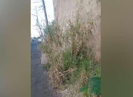Sem espaço para caminhar, moradora reclama de mato na calçada