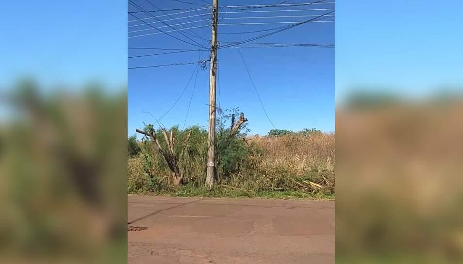 Foto enviada por leitora mostra vegetação alta em terreno (Foto: Direto das Ruas)