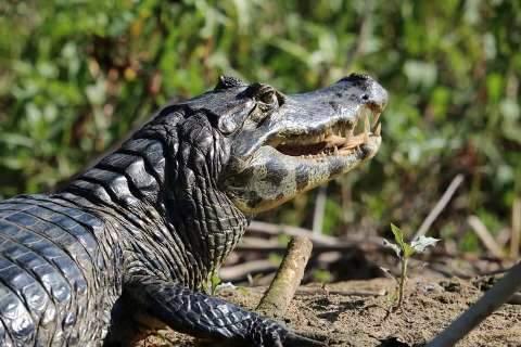 No Dia da Biodivesidade, grupo convoca homenagem com fotos do Pantanal