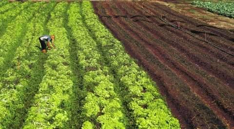Agricultores familiares de MS ganham plataforma digital para vender produtos