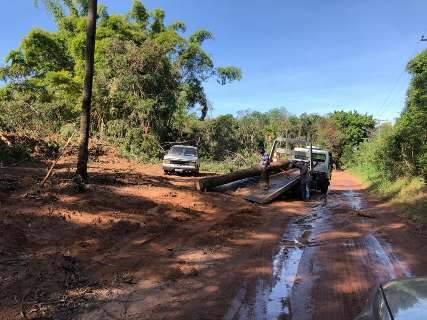 Desmatamento de lotes em área de preservação preocupa vizinhos