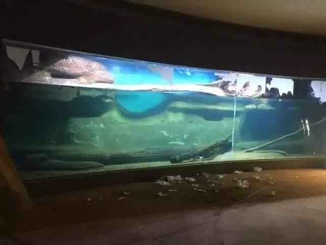 Obra em um dos tanques do Aquário (Foto: Divulgação - Governo MS)