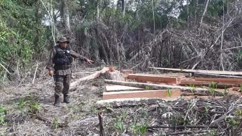 Fazendeiro é multado por desmatamento no Pantanal para fazer cerca e porteira