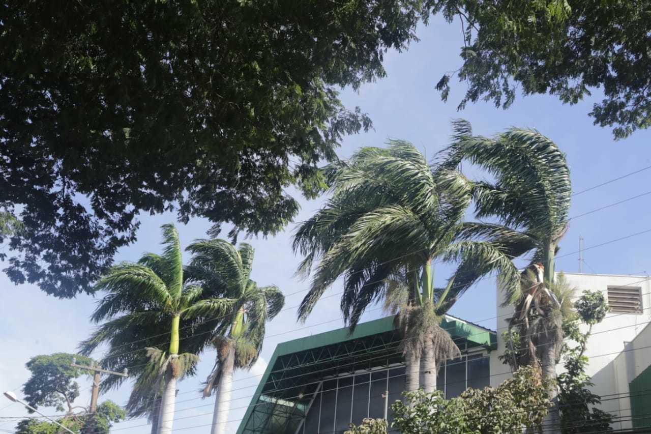 Velocidade dos ventos mexeram com árvores no Bairro Jardim dos Estados, em Campo Grande (Foto: Kisie Ainoã)