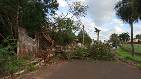 Árvore cai durante vendaval, derruba muro e interdita rua na Capital