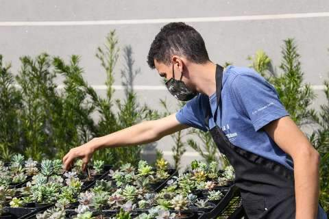 """Terapia de """"Mineiro"""", plantas viraram floricultura no Cidade Jardim"""