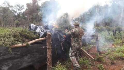 Polícia paraguaia encerra operação com 476 toneladas de maconha destruída