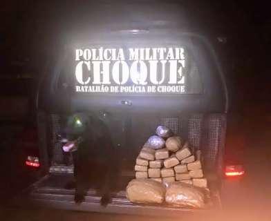 Pietá, cachorra-policial do Choque, acha maconha em mala de jovem que ia para SP