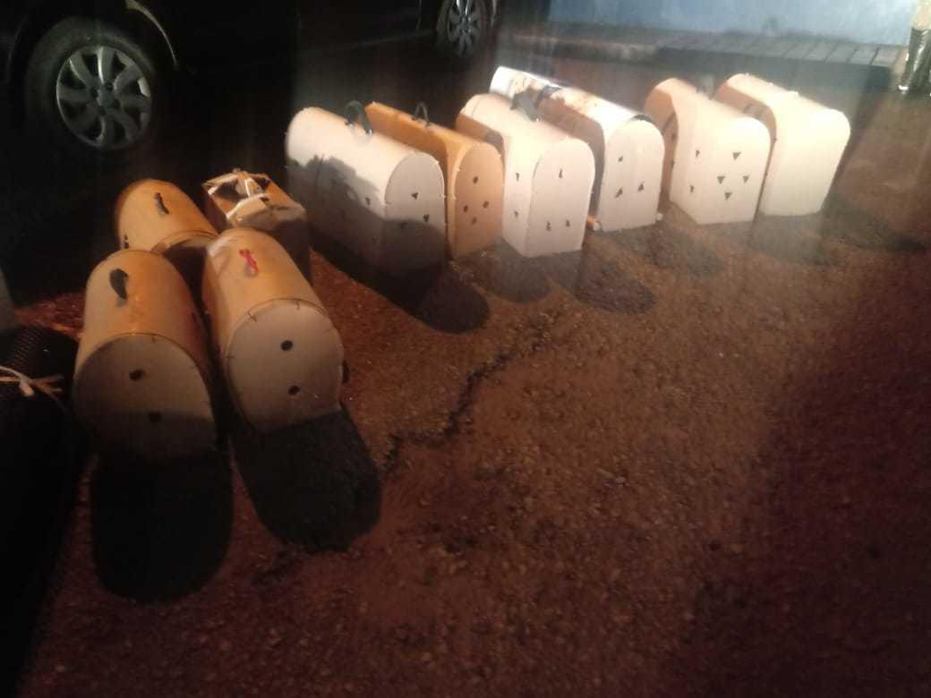 Caixas de papelão onde os galos eram transportados (Foto: Divulgação/PRF)
