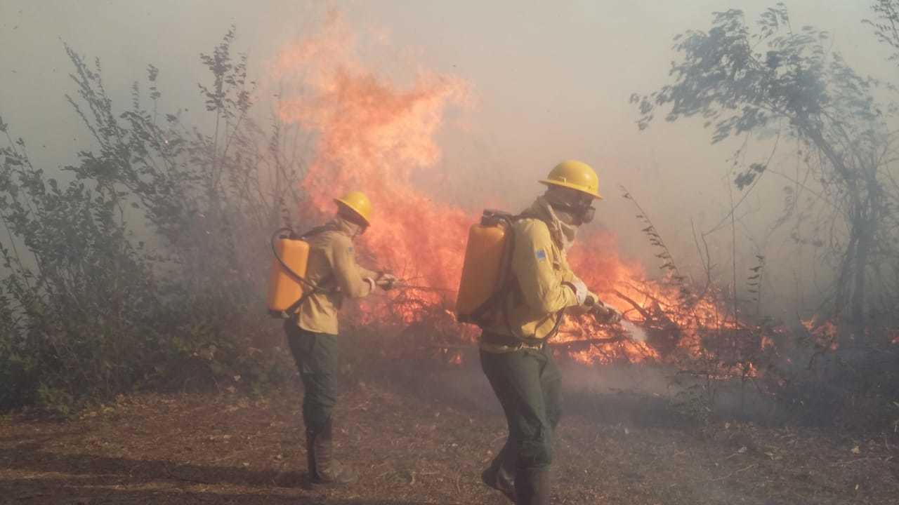 Brigadistas do Prevfogo atuam contra incêndios na região pantaneira (Foto: Divulgação/Ibama-MS)