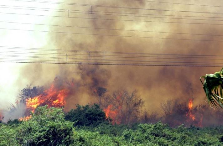 Fogo destrói área de vegetação no pantanal sul-mato-grossense (Foto: divulgação/Portal Governo do Estado)
