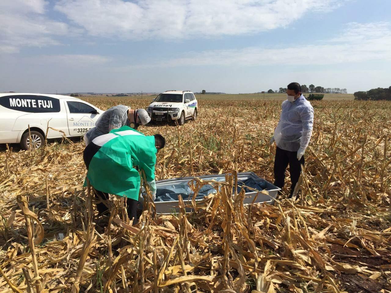 Corpo estava em meio a plantação de milho, às margens da BR-060 (Foto: Aletheya Alves)