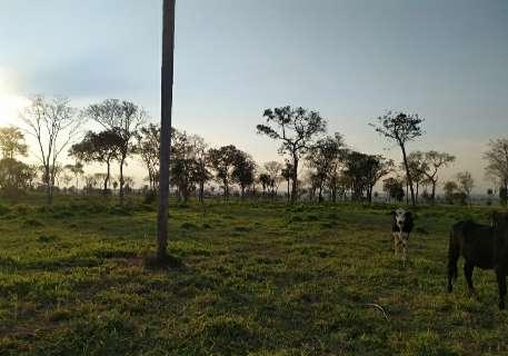 Fazendeiro é multado por desmatar área de preservação para abrir pasto