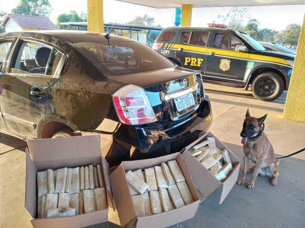Cão da PM ajudou a localizar tabletes de maconha em veículo abordado pela PRF (Foto: Sidney Assis)