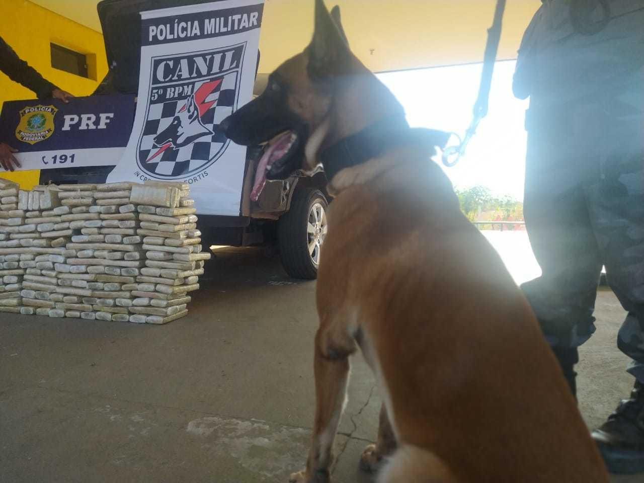Animal é treinado para auxiliar em casos como o que aconteceu na tarde desta segunda-feira (Foto: Sidney Assis)