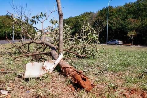 Em zigue-zague, advogado bêbado foge da PM e bate carro em árvore