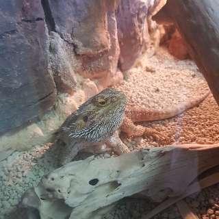 Após dragão, cobras e aranhas foram entregues para evitar prisão em MS