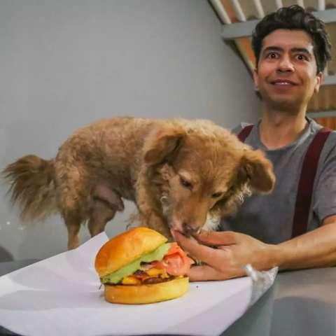 "Tchoco, o cachorro fora da lei, vira ""dono"" e modelo de hamburgueria"