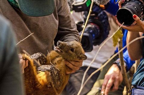 Animais atingidos pelo fogo serão atendidos por unidade móvel no Pantanal