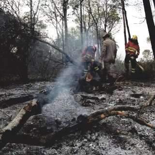 Número de focos de incêndio no Pantanal é o maior em 22 anos