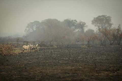 Em ano histórico de destruição do Pantanal, valor de multas é o menor desde 2003