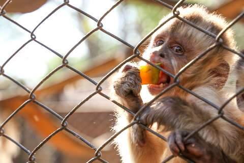 Em espera sem fim, macacos do Cras só podem ser soltos depois de completar bando