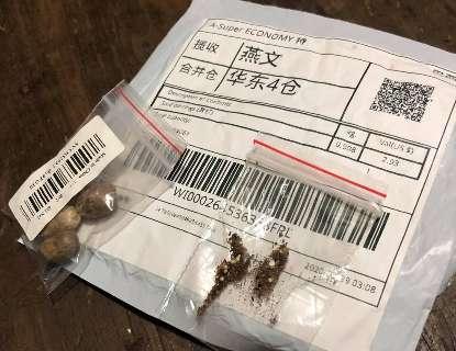 Governo emite alerta depois de pessoas receberem em casa sementes da China