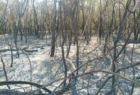Produtora rural é multada em R$ 381 mil por incendiar 97 hectares de vegetação