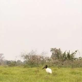 """Com céu esbranquiçado, """"Portal do Pantanal"""" se prepara para a chuva"""