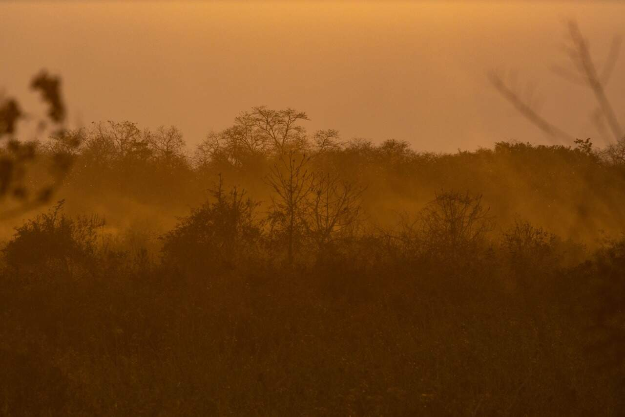 Mato seco no pantanal. (Foto:Jeferson Prado/Sesc Pantanal)