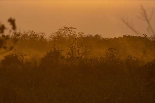 Fogo no Pantanal pode deixar danos irreversíveis