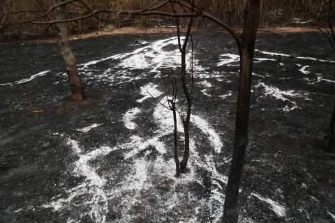 Polícia aguarda laudo pericial para autuar fazendeiros por queimadas no Pantanal