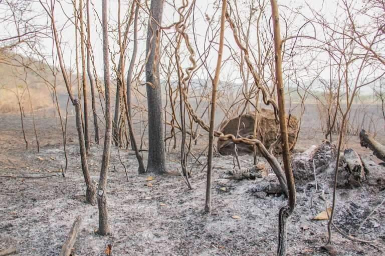 Em queimadas e seca históricas, quase 3 milhões de hectares do Pantanal já foram consumidos, o que corresponde a praticamente 20% do bioma. (Foto: Silas Lima)