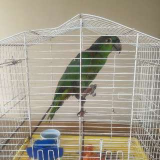 Em casa de homem preso com armas e munição, polícia resgata papagaio maltratado
