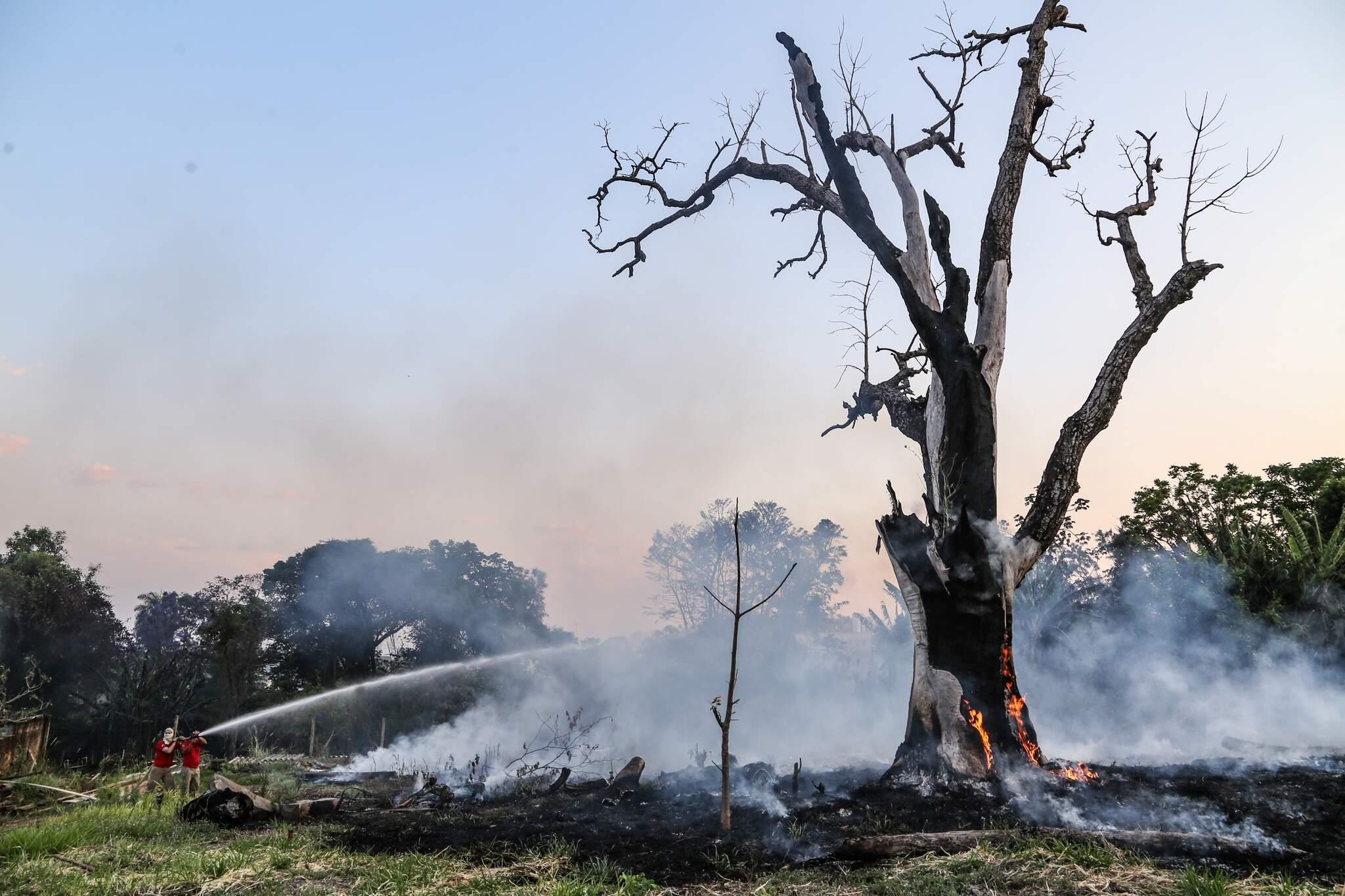 Bombeiros tentando apagar fogo que atingiu árvore. (Foto: Kísie Ainoã)