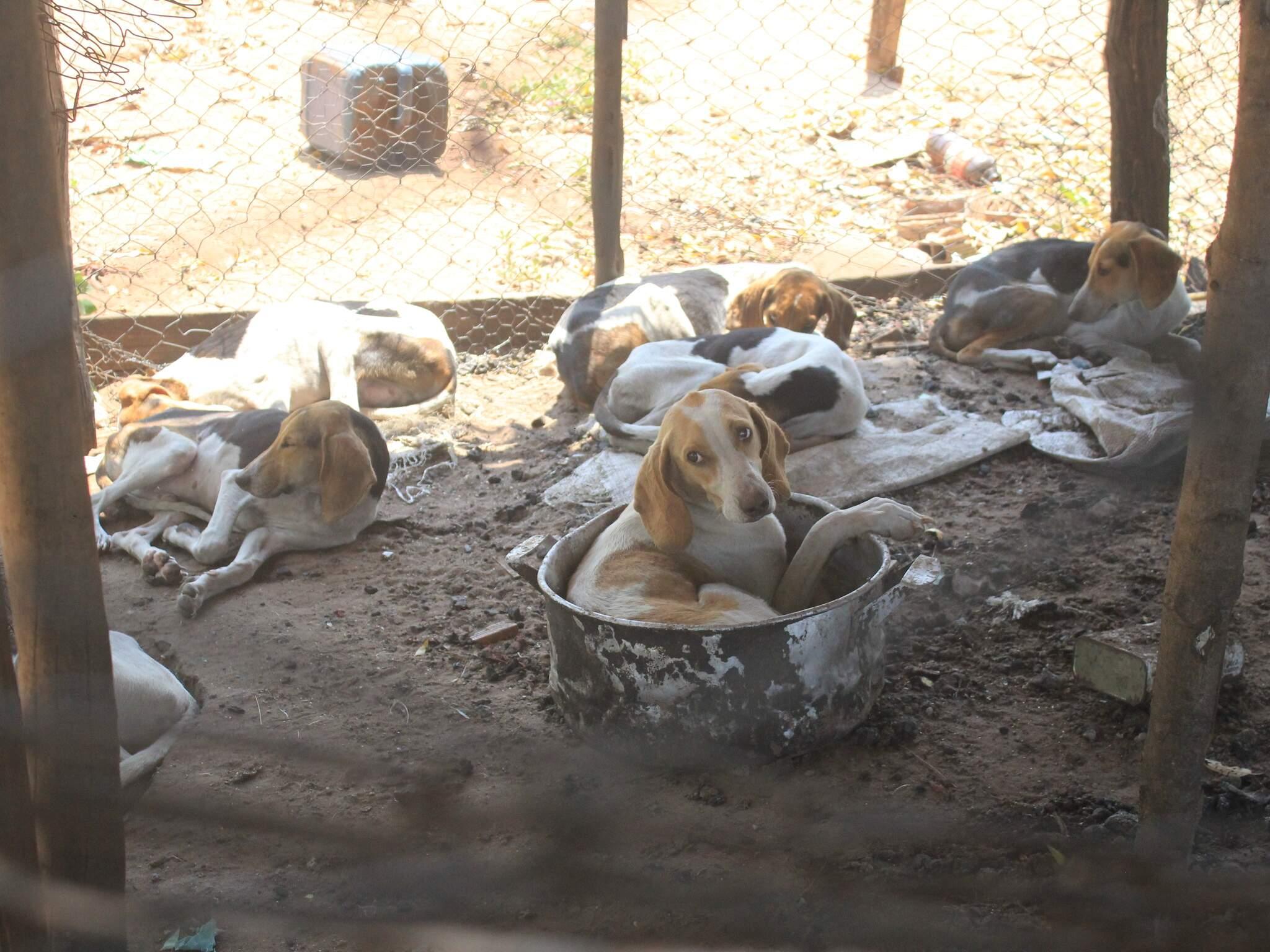 Animais estavam em fazenda e foram resgatados no dia 23 de setembro do ano passado. (Foto: Marina Pacheco/Arquivo)