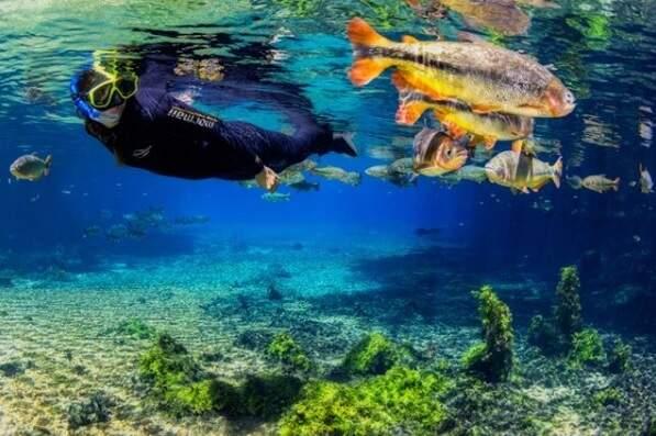 Turista faz mergulho no Rio da Prata (Foto: Recanto Ecológico Rio da Prata)