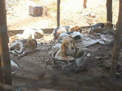 Juiz manda que 40 cães resgatados fiquem em lares temporários
