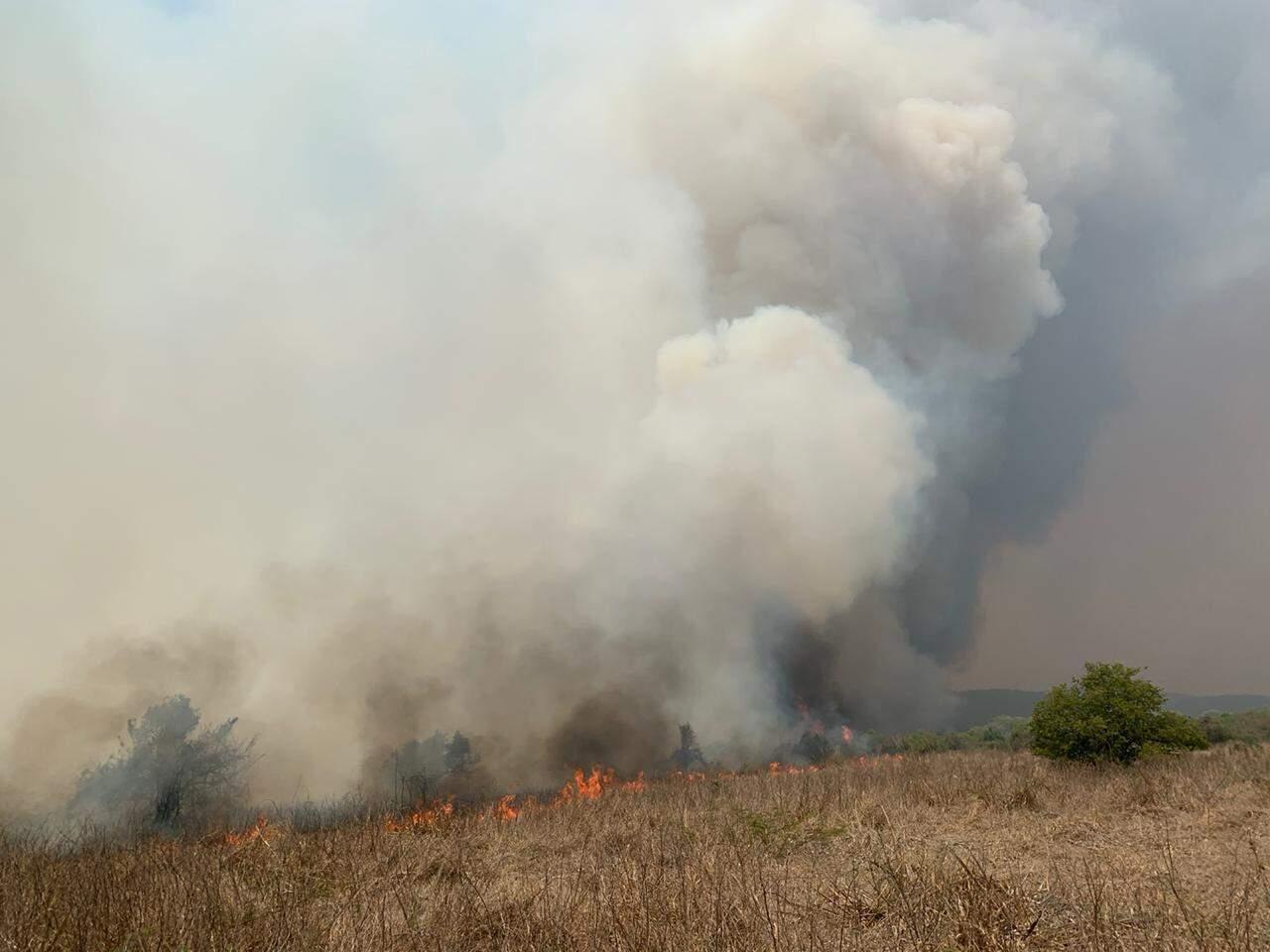 Força-tarefa tenta impedir que fogo avance pela Serra do Amolar. (Foto: Divulgação/Instituto do Homem Pantaneiro)