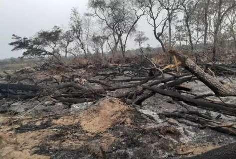 Operação contra incêndios criminosos em MS rendeu R$ 8 milhões em multas