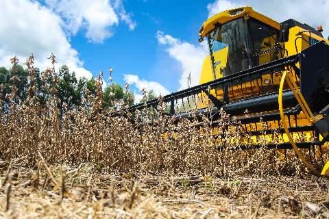 Safra agrícola alcança valor de produção recorde de R$ 361 bilhões em 2019