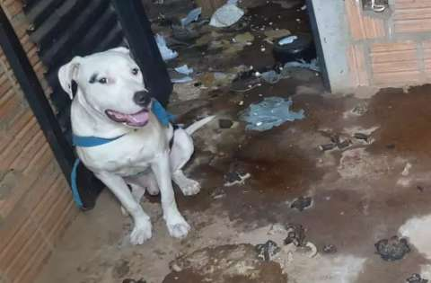 Pitbull abandonado é resgatado e se torna primeiro mascote de delegacia
