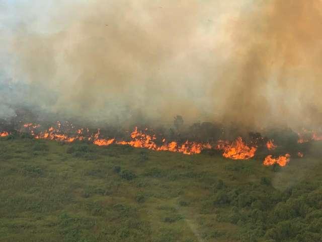 Por mais recursos, comissão inclui Pantanal no Conselho da Amazônia Legal